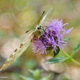 PACIFIC CREST TRAIL & AKRON, NY – Some shots from a VERY short hike on the Pacific Crest Trail (in flip flops) whereupon a few beautiful butterflies modeled for me, […]