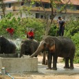 Helped build a water cistern while at an elephant camp in Thailand. A good notion in Thailand can become an exercise in frustration for farang or those not on Thai […]